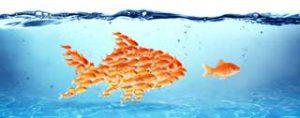 Developing Customer Focused Leadership
